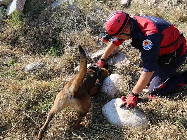 Adana Büyükşehir Belediyesi İtfaiye Daire Başkanlığı'nda uzman eğitmenler tarafından eğitilen köpekler, doğal afetlerde enkaz arama, kaybolmalarda iz sürme, hayat kurtarma, emniyet birimlerince de bomba arama ve uyuşturucu bulma çalışmalarında görev yapıyor.