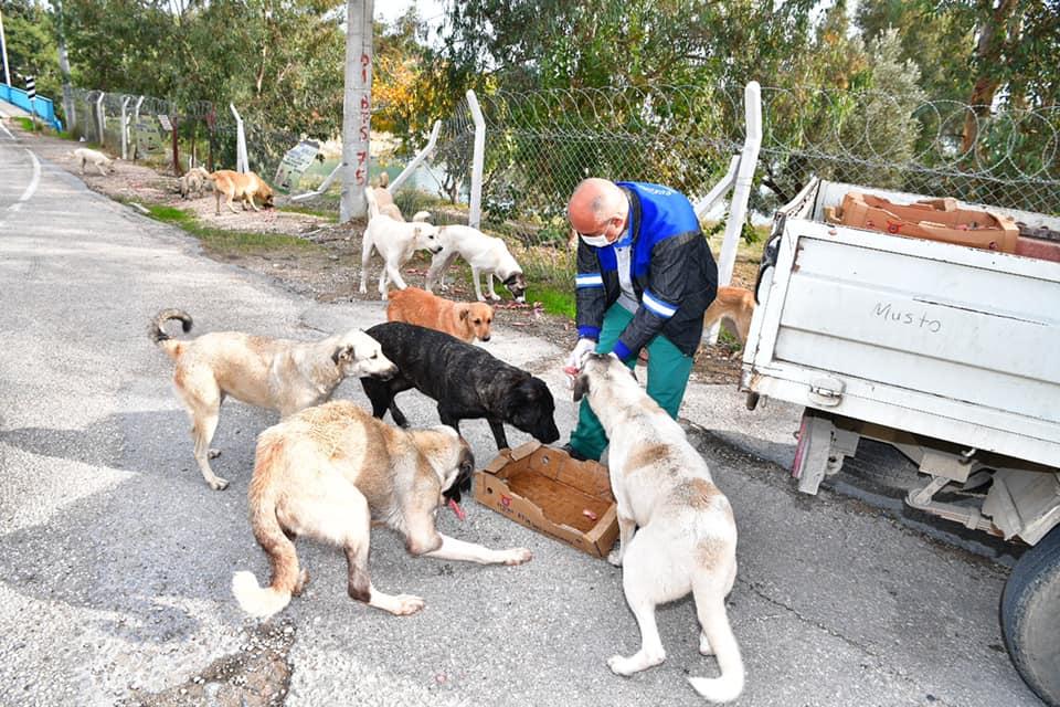 Çukurova Sokak Hayvanlarına Sahip Çıkıyor