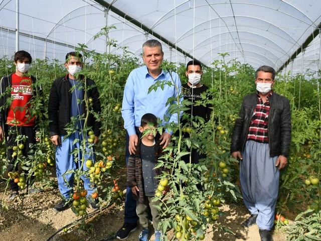 Mağdur domates üreticisi çözüm bekliyor