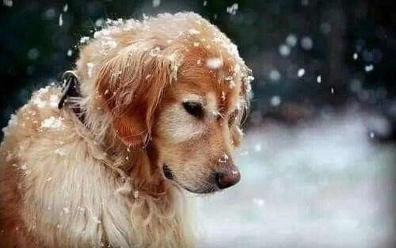 Kışın bir köpek 17 saat, bir kedi 6 saat aç kalırsa maalesef donarak ölüyor. Tüyleri onları soğuktan korumuyor.