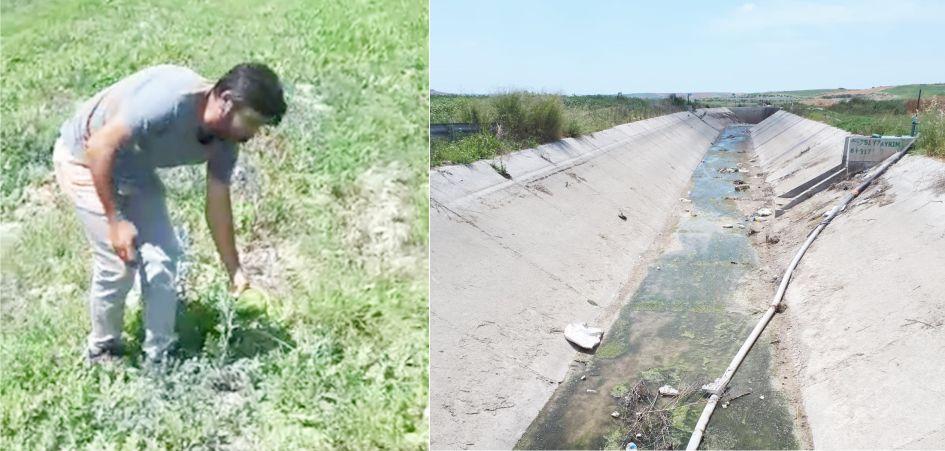 Karpuz Tarlaları Suzuluktan Ölüyor
